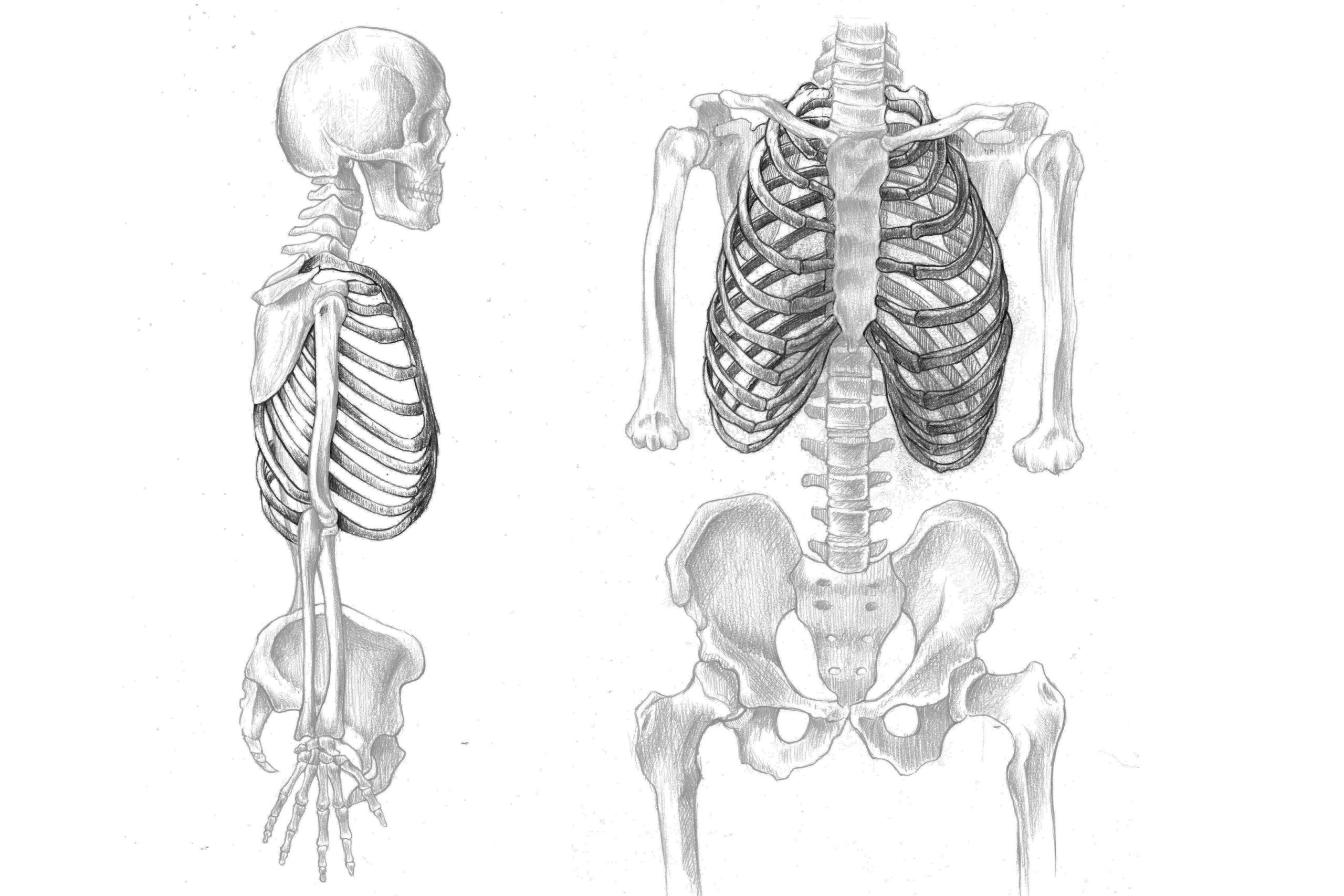 肋骨の位置