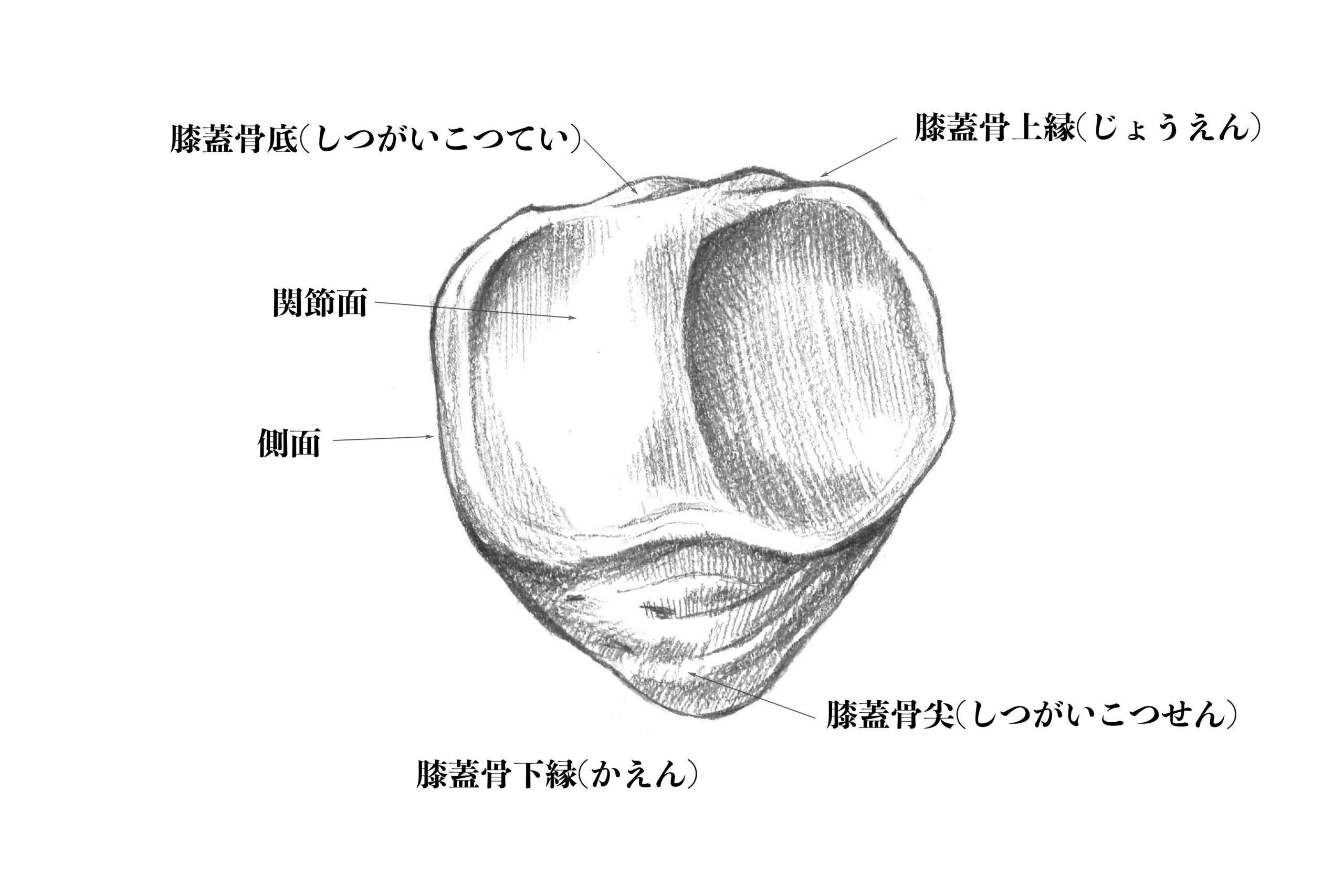 膝蓋骨裏側