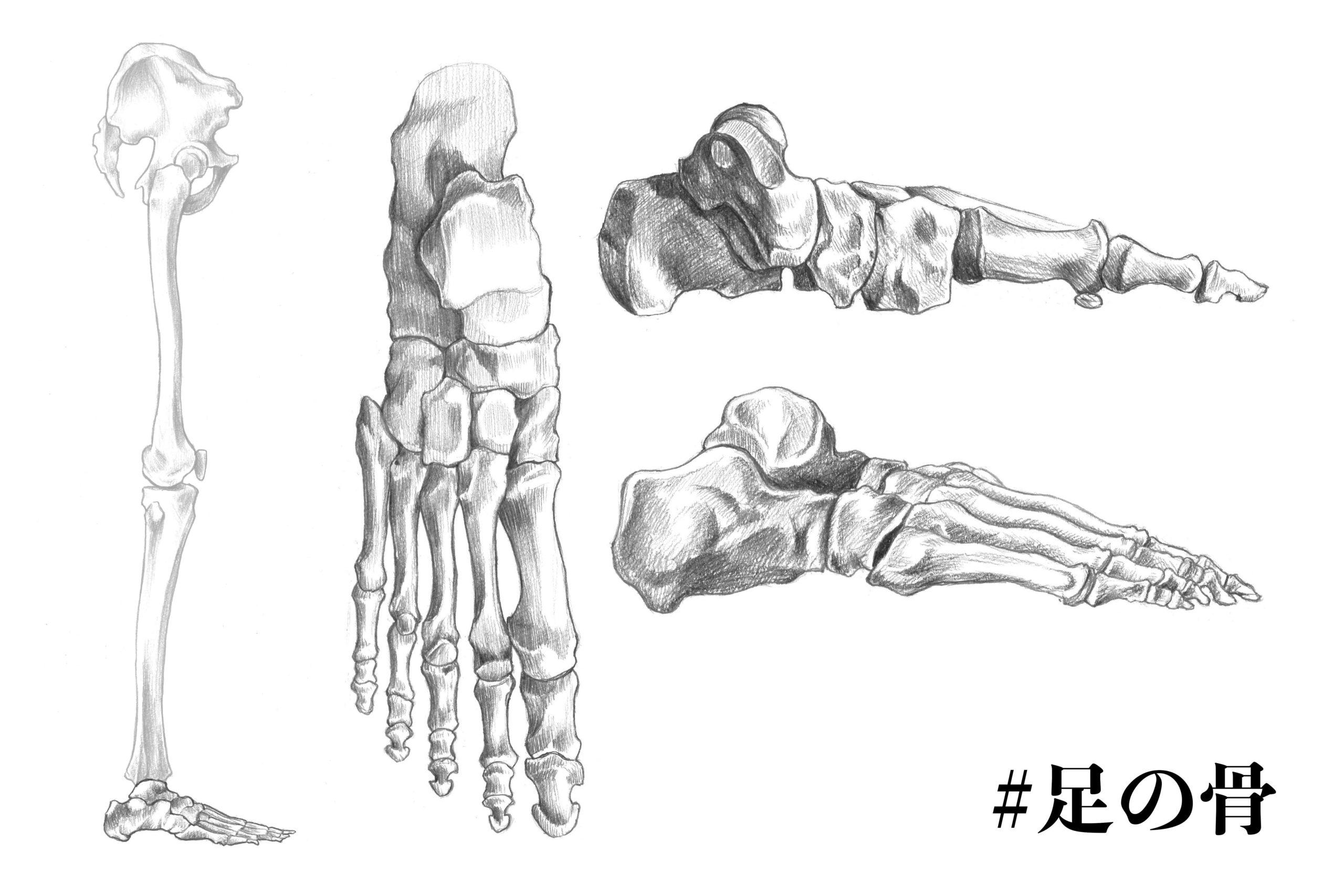 足の骨についてのスケッチ
