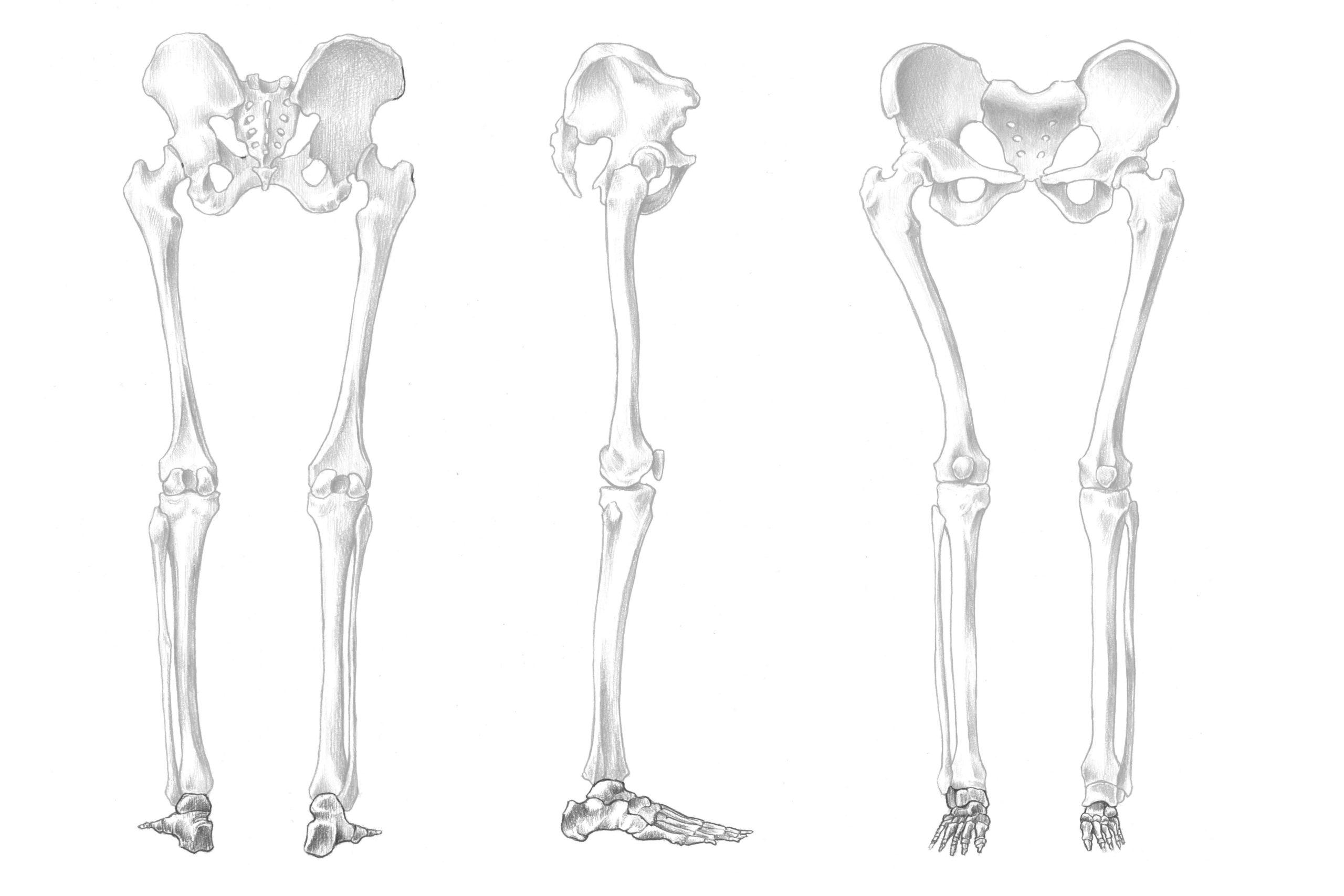足の骨の位置