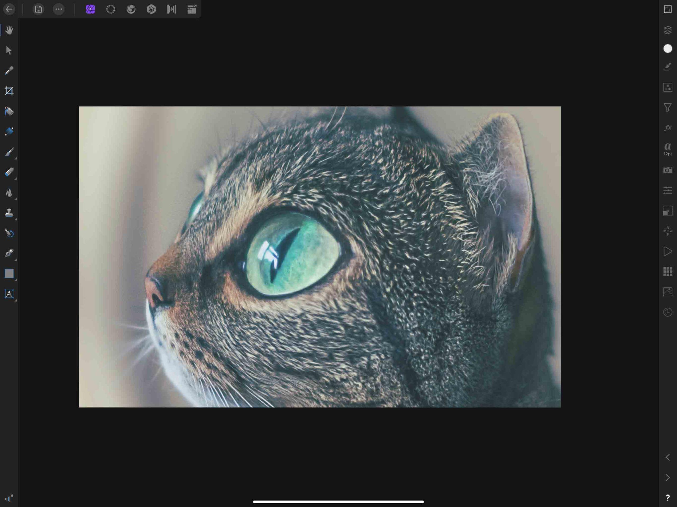 猫の写真をゆがませた例