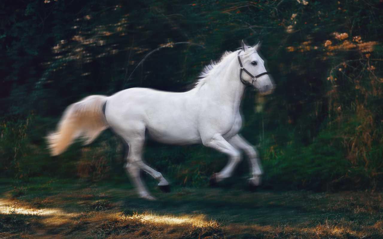 馬の写真ブラー