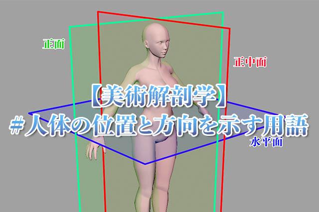 美術解剖学人体の位置と方向を示す用語アイキャッチ