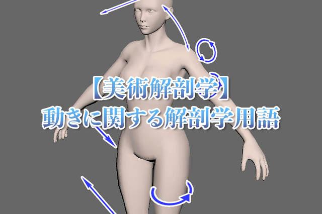 美術解剖学動きに関する用語アイキャッチ