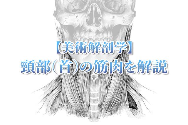 頸部の筋肉アイキャッチ