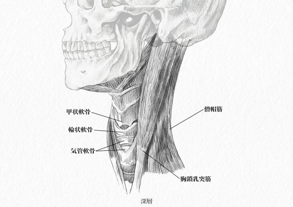 頸部の筋肉_深層